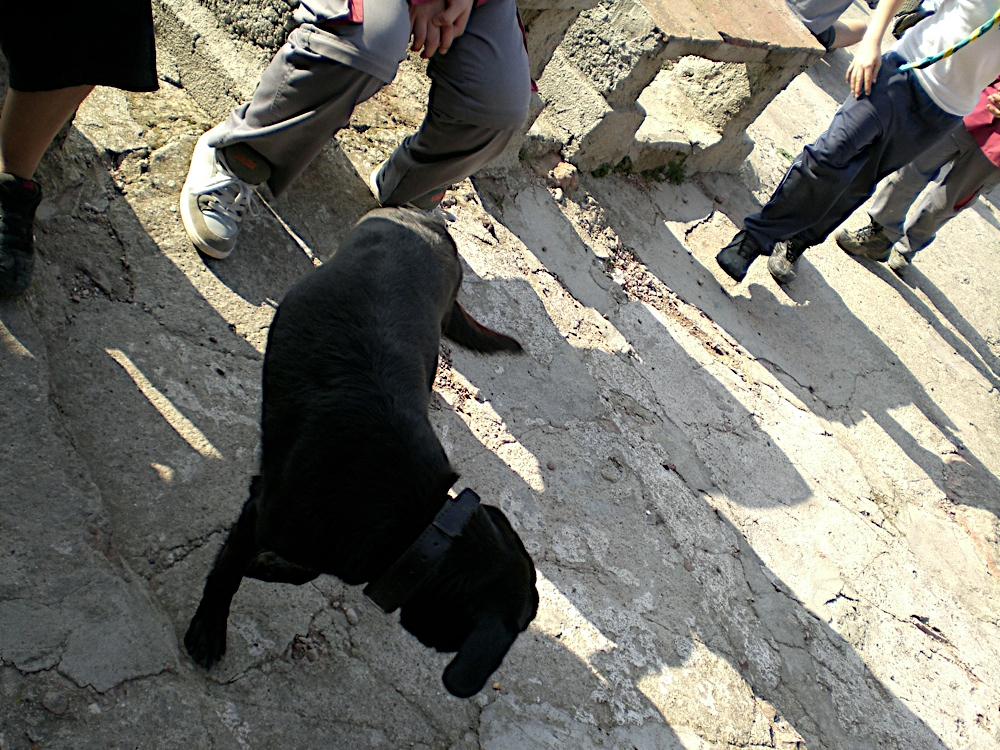 Sortida Sant Salvador de les espasses 2006 - CIMG8258.JPG