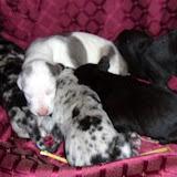 Gidget's babies @ 2 weeks