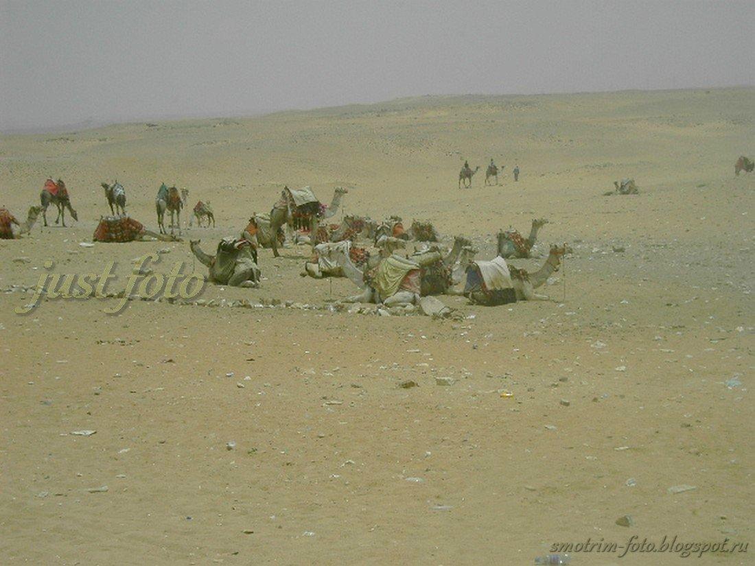 Возле египетских пирамид