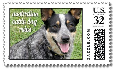 Australian Cattle Dog Rules