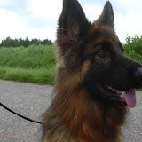 20100905 Hundespaziergang 34 - HS_34%2B%252820%2529.JPG