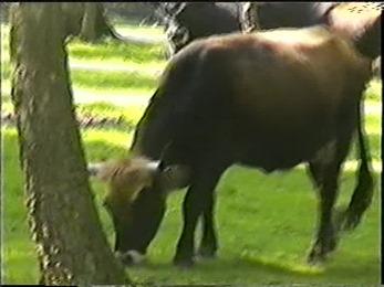 1998.09.19-002 aurochs