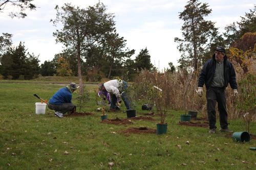 Hammo Fall Planting - Jim Murtagh - BC3G2524.jpg