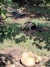 खैरा : मनवा जंगल से दो सगे भाइयों का शव बरामद, 28 दिन पूर्व हुआ था अपरहण