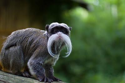 प्रकृति के कुछ 8 खूबसूरत जानवर | Some 8 Beautiful Animals Of Nature