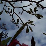 Hawaii Day 6 - 100_7641.JPG
