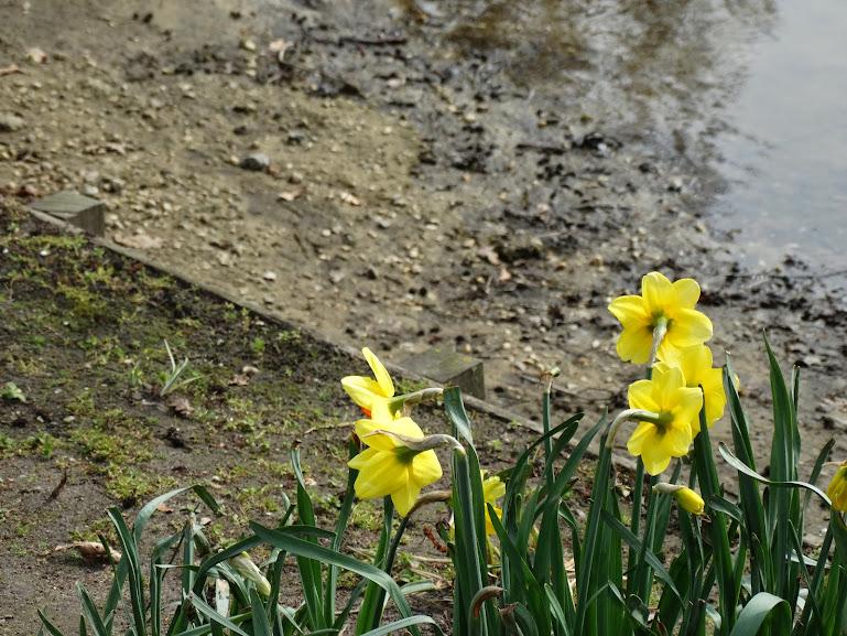 Lentefoto's uit de Efteling