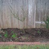 Gardening 2014 - 116_1129.JPG