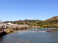 桜桟橋 (2014.4.4)