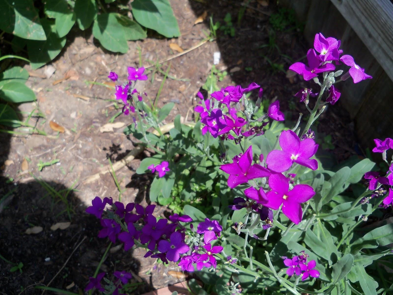 Gardening 2013 - 115_5706.JPG