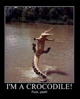 motivational i am a crocodile fuck yeah, motivational crocodile, i am a crocodile fuck yeah, crocodile fuck yeah, crocodile, funny motivational pictures, motivational funny, motivational fuck yeah, motivational pictures, motivational, i am a crocodile, funny crocodile