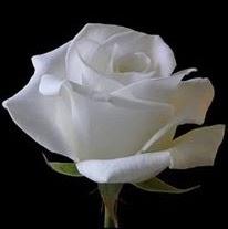 Ket ban bon phuong Kết bạn huong duong hoa- Đã có gia đình Tìm người yêu thời vụ