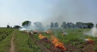 district-angry-farmers-burnt-soybeans