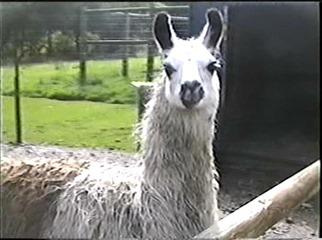 1998.09.09-004 lama