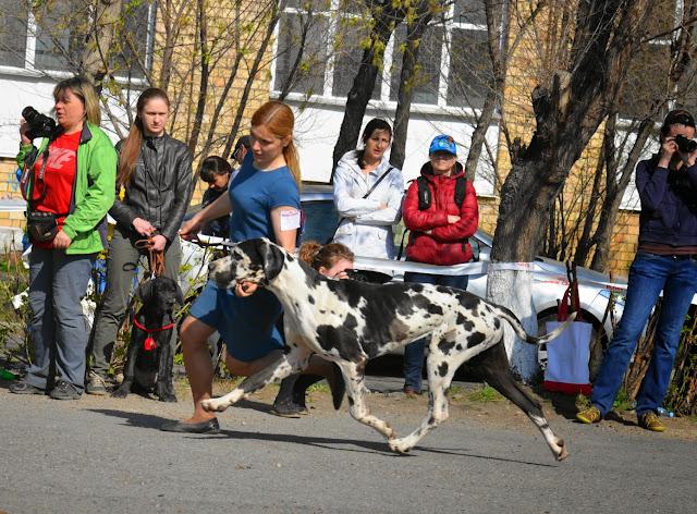 Кубок Аризоны-14(ПК)+ЧРКФ, Красноярск, 27 апреля 2014 DSC_5604