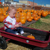 Pumpkin Patch - 115_8255.JPG