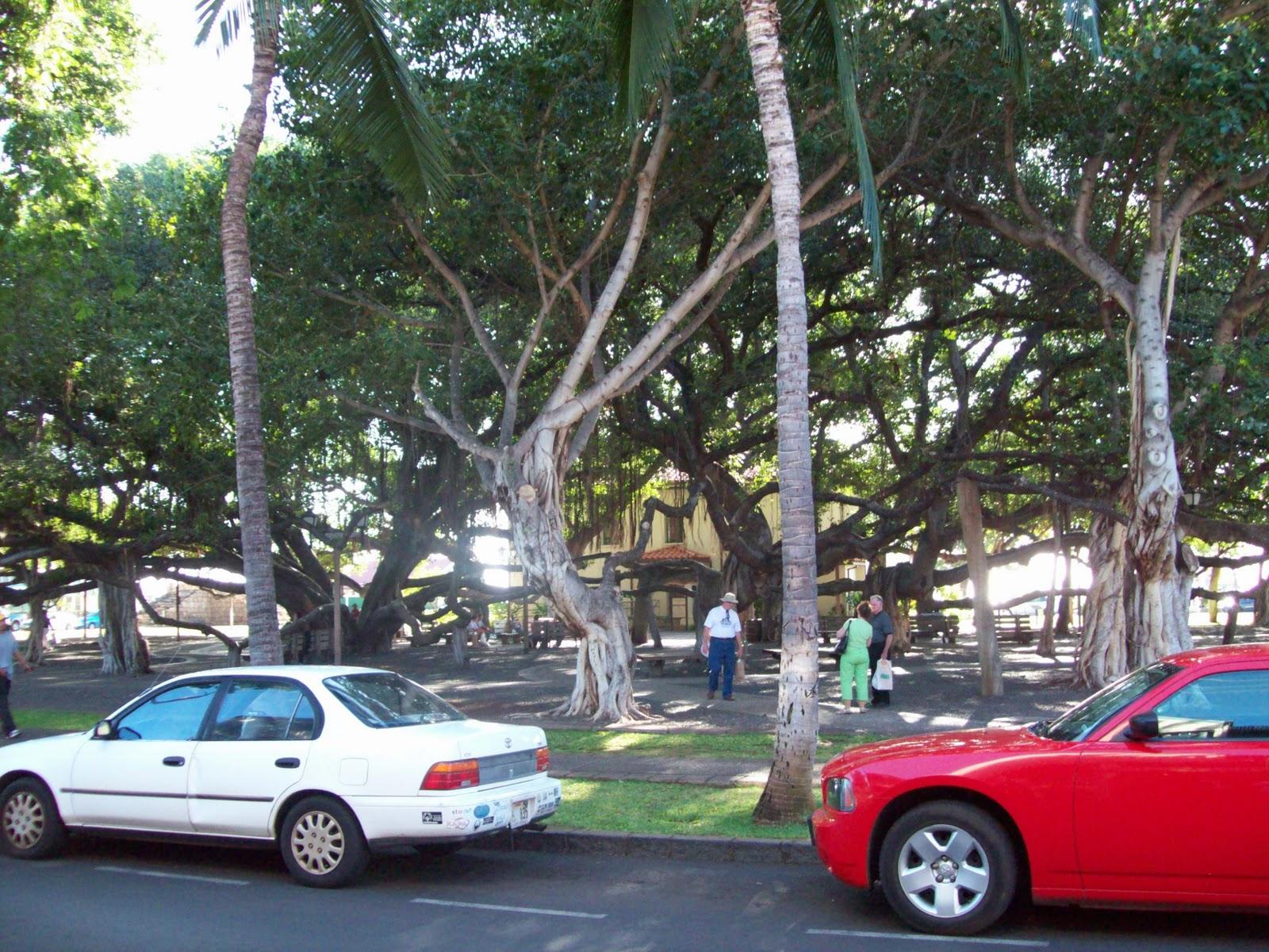 Hawaii Day 5 - 114_1643.JPG