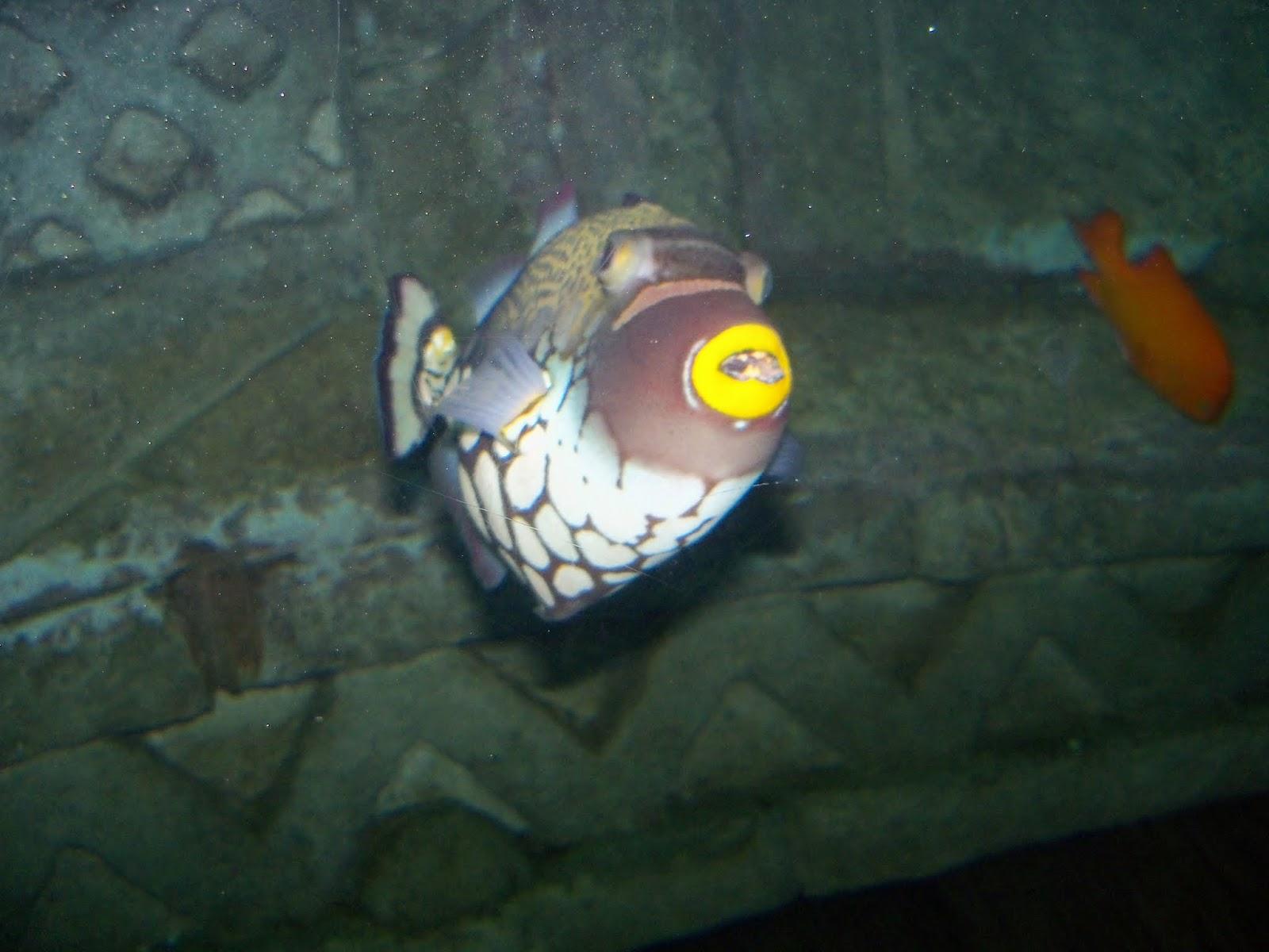 Downtown Aquarium - 116_3889.JPG