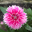 vanthang tran's profile photo