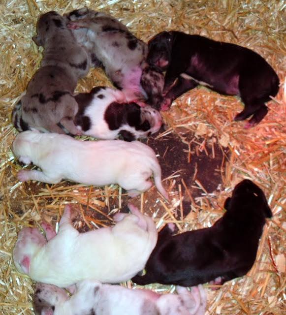 Cheyenne's babies @ 5 days