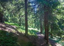20170630_Carpathians_227.jpg