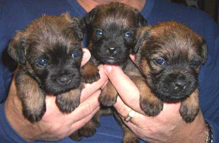 BT Pups just opening their eyes.