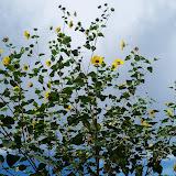 Gardening 2012 - 115_3130.JPG