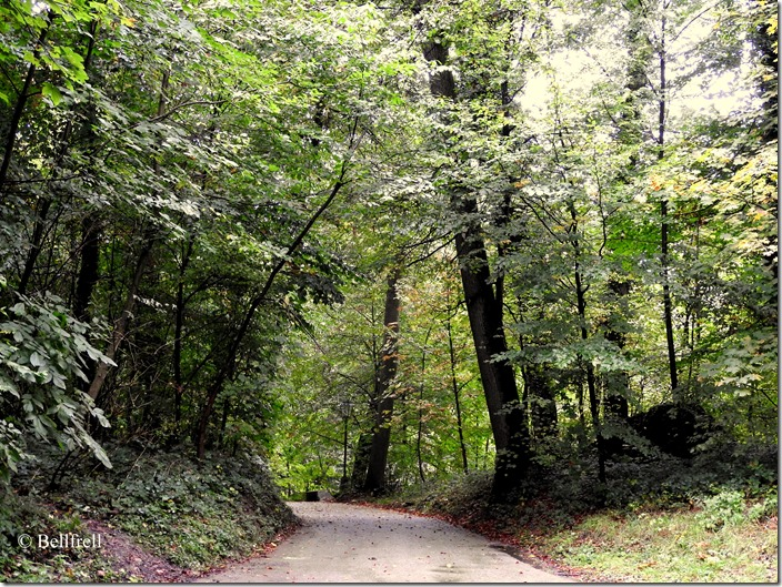 Herbstwaldweg Mönchsberg