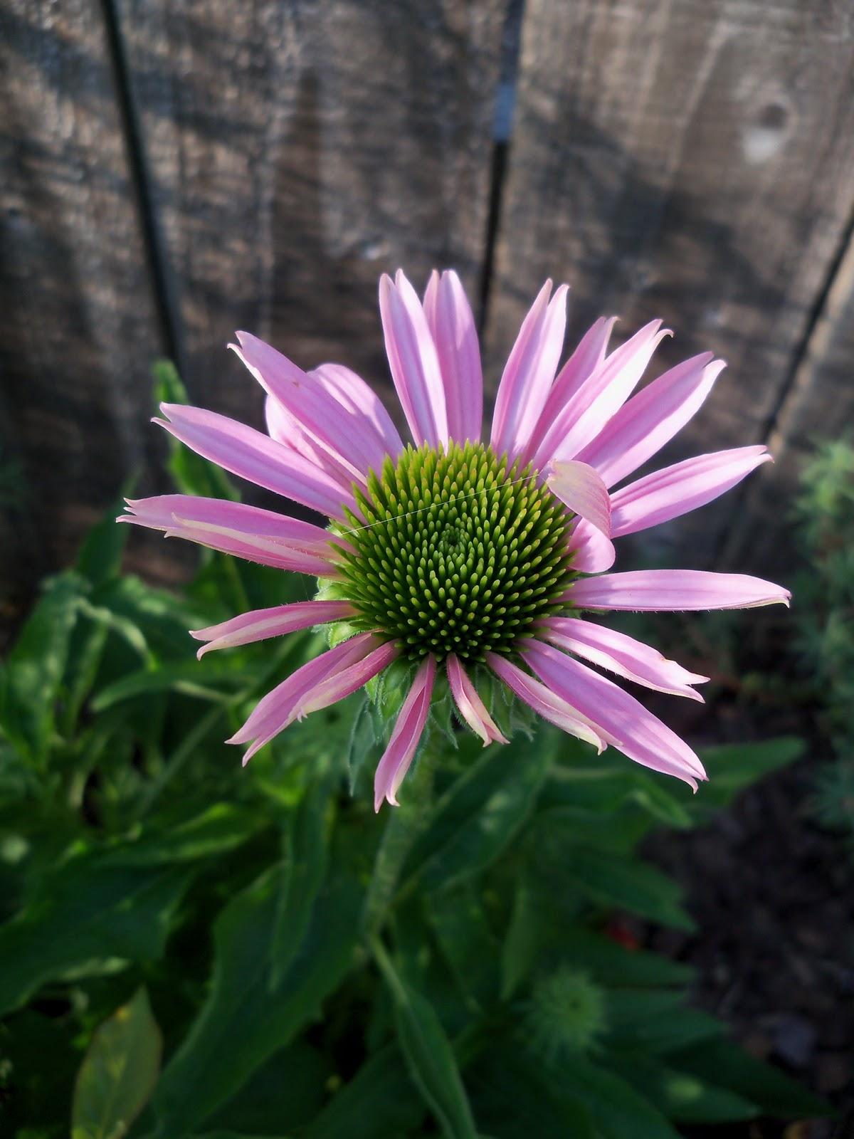 Gardening 2010, Part Two - 101_2965.JPG