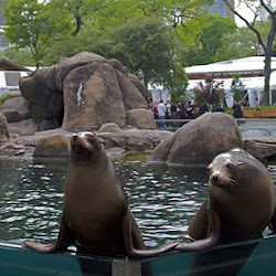 Korea Central Zoo's profile photo