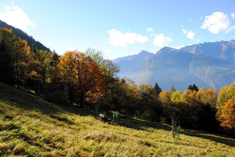 Alpe di giuliagriziotti