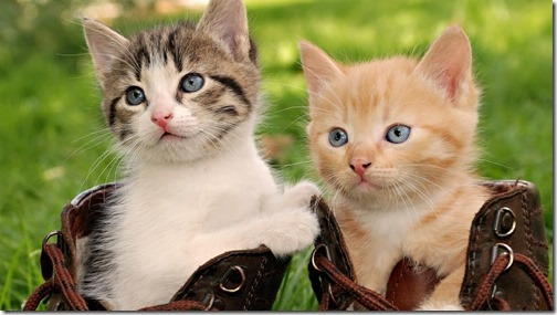22 fotos de gats (27)