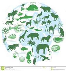 animals-biodiversity-28900966