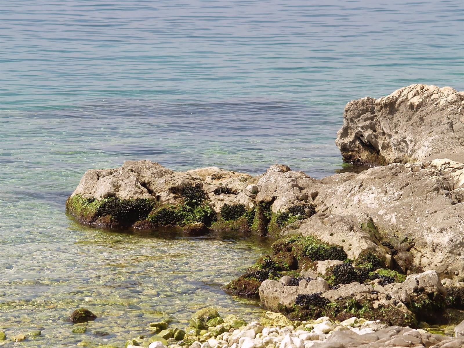 Popotniški spomladanski izlet, Istra 2007 - P0136200.JPG