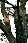 Screech owl nest box.
