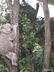 Koala Chiller 1