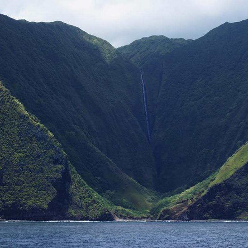 La Monsanto mette il suo zampino di morte anche alle Hawaii.