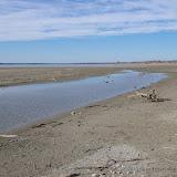 01-19-13 Hagerman Wildlife Preserve and Denison Dam - IMGP4042.JPG