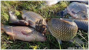 Рыбалка под Астраханью.