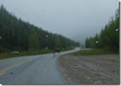 Moose, Alaska Highway
