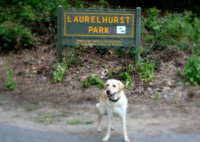 cabana standing in front of laurelhurst park sign