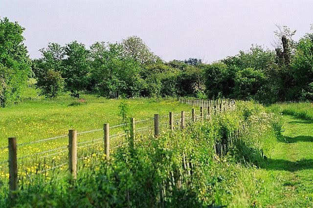 Grassfield Footpath - Hedge Planting - 4134928510233_0_BG.jpg