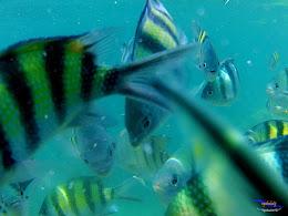 pulau harapan, 5-6 september 2015 skc 007