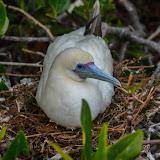galapagos - Galapagos_FB_2-79.jpg