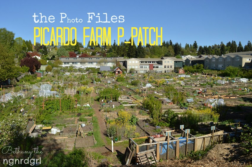 the Photo Files: Picardo Farm P-Patch