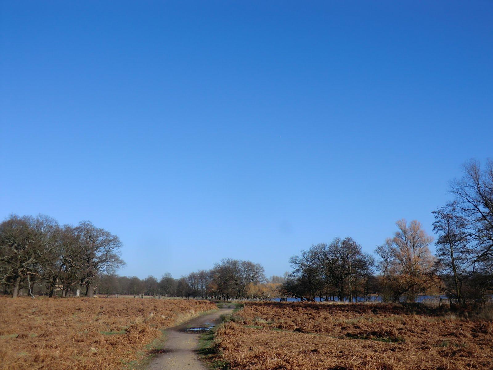 CIMG2460 Richmond Park in winter