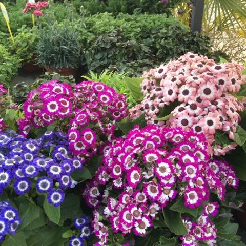 Albin hogar jardin plantas de temporada for Plantas temporada
