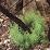 Fire Ecology's profile photo