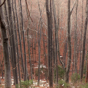 by Gino Libardi - Nature Up Close Trees & Bushes ( forests, autumn, autumn colours, forest )