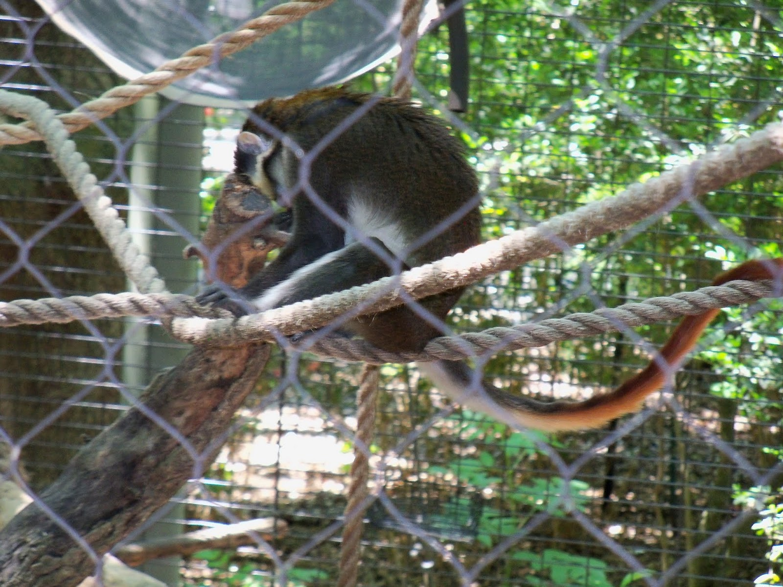 Houston Zoo - 116_8480.JPG